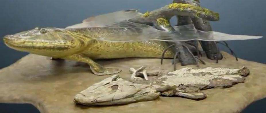 tiktaalik fossile ile ilgili görsel sonucu